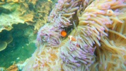 surga-bawah-laut-indonesia-barat-ada-di-pulau-abang-1